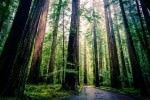 finding yourself amongst redwoods