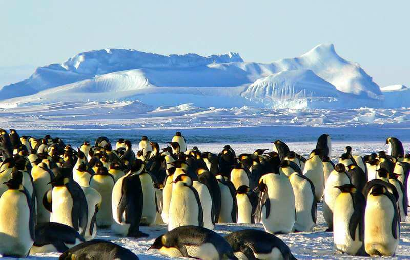 Visiting Antarctica and seeing penguins