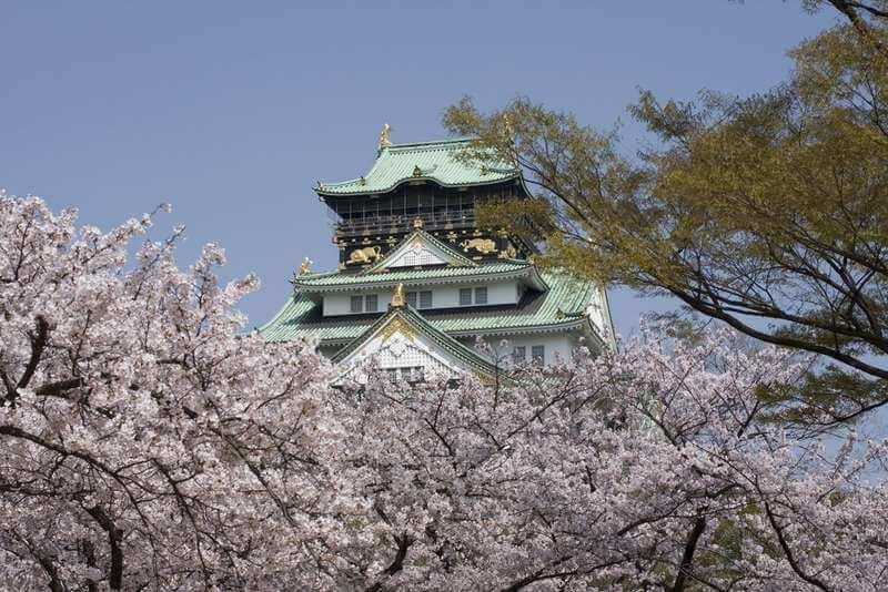 Cherry Blossom of Osaka