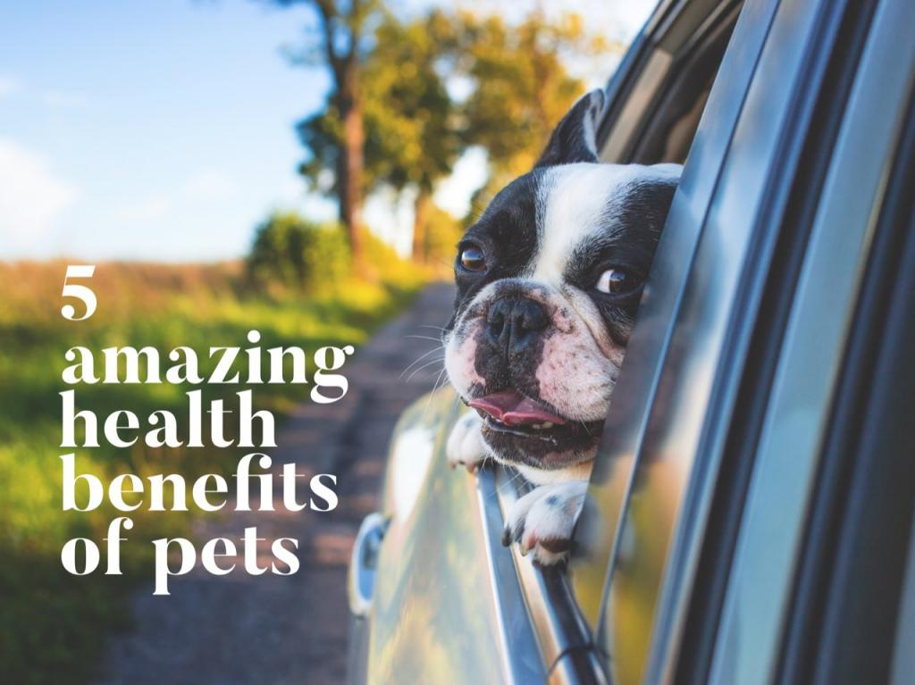 A French Bulldog in the window of a Yukon Denali showing the health benefits of pets