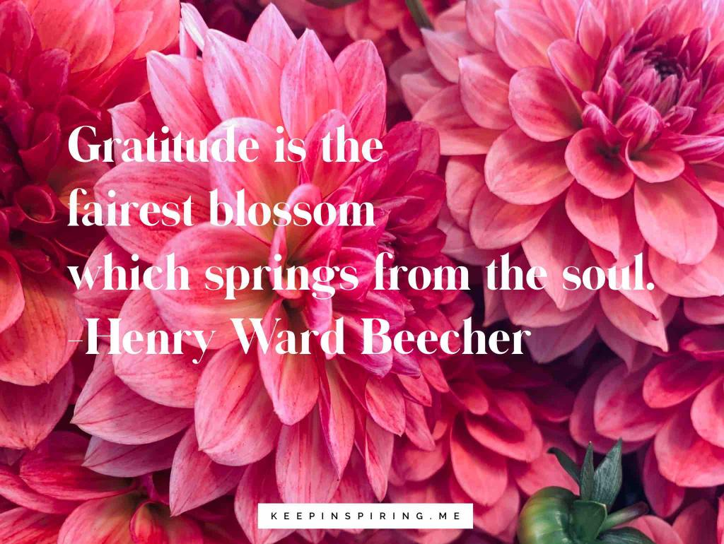 Brilliant pink dahlia flowers blossoming and a quote about gratitude