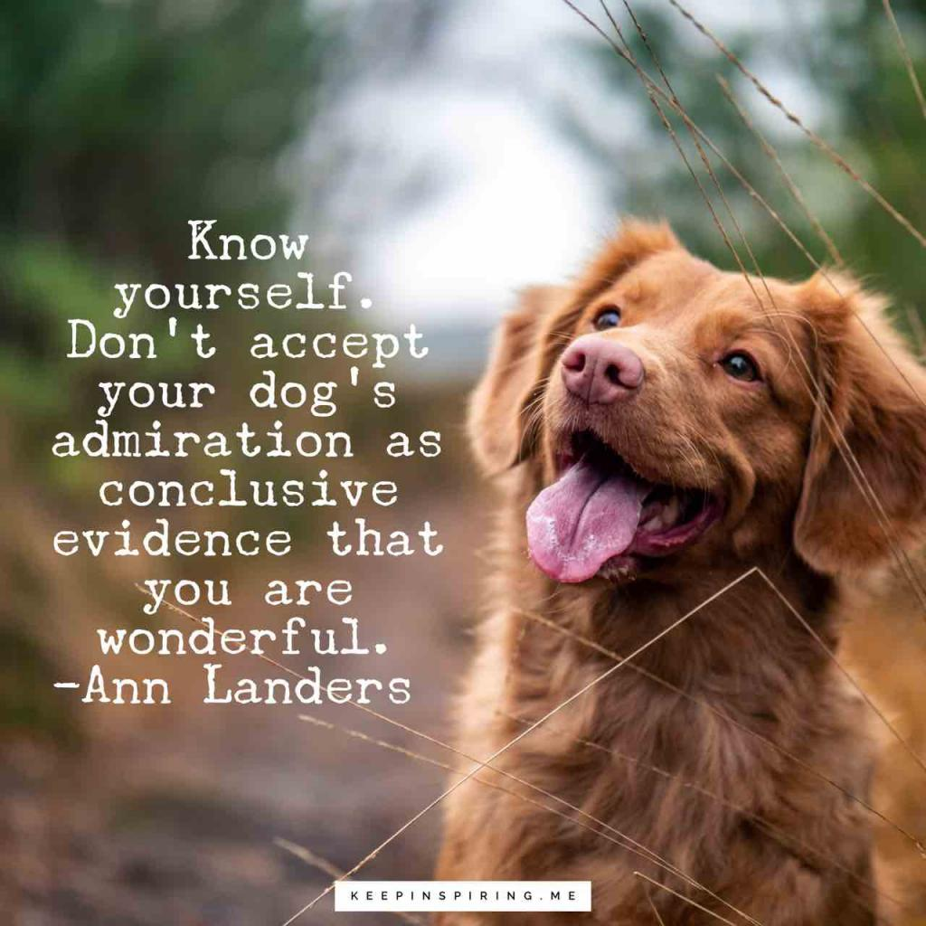 "Ann Landers quote ""Know yourself. Don't accept your dog's admiration as conclusive evidence that you are wonderful"""