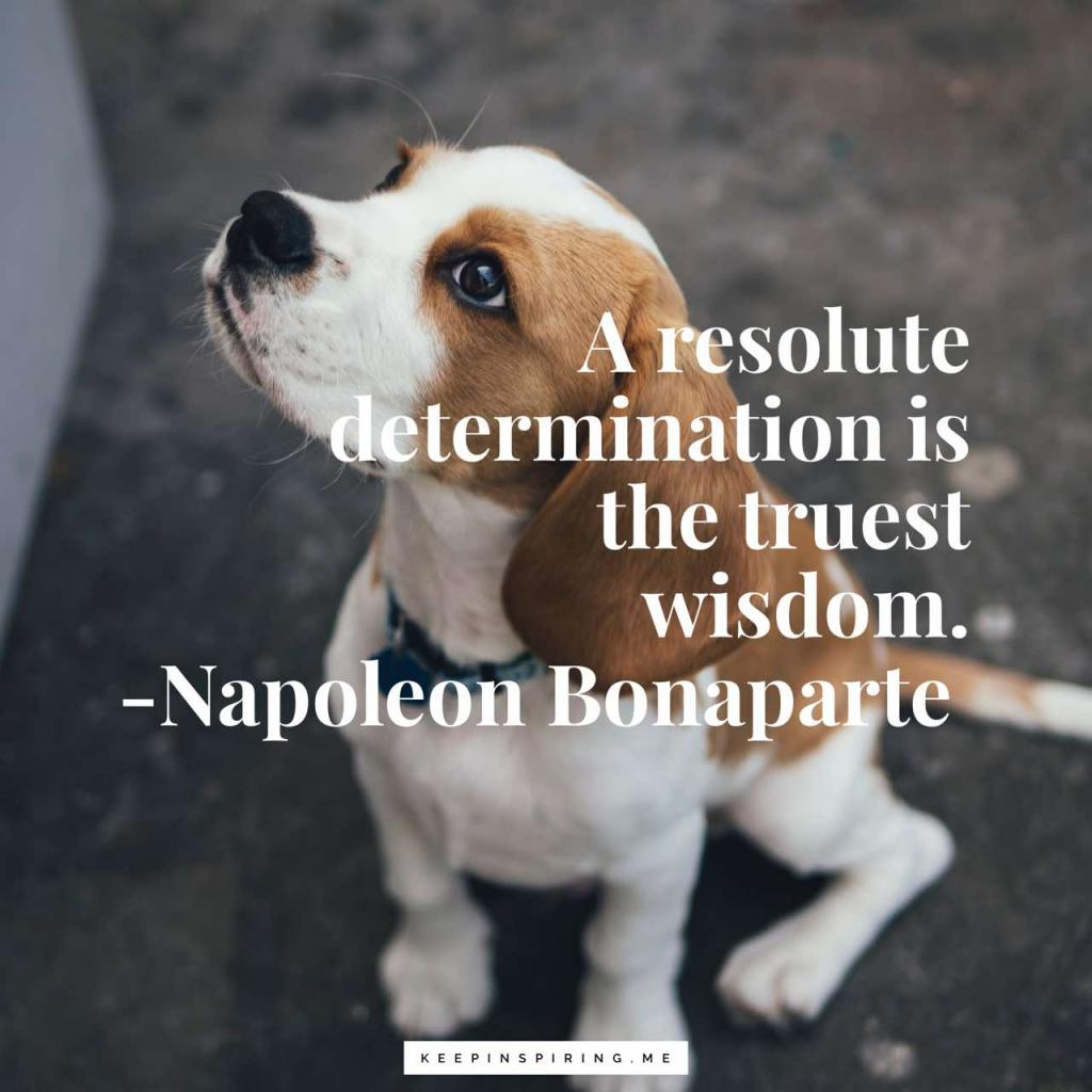 "Napoleon quote ""A resolute determination is the truest wisdom"""