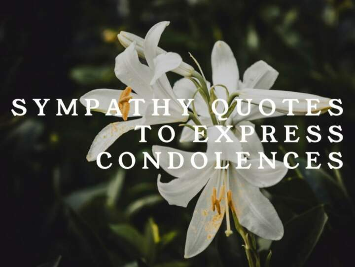 Sympathy Quotes to Express Condolences