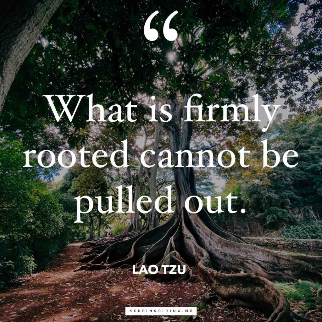 "Lao Tzu quote ""What is firmly rooted cannot be pulled out"""