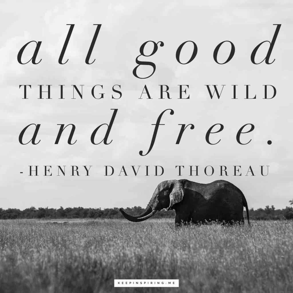"""""""All good things are wild and free"""""""