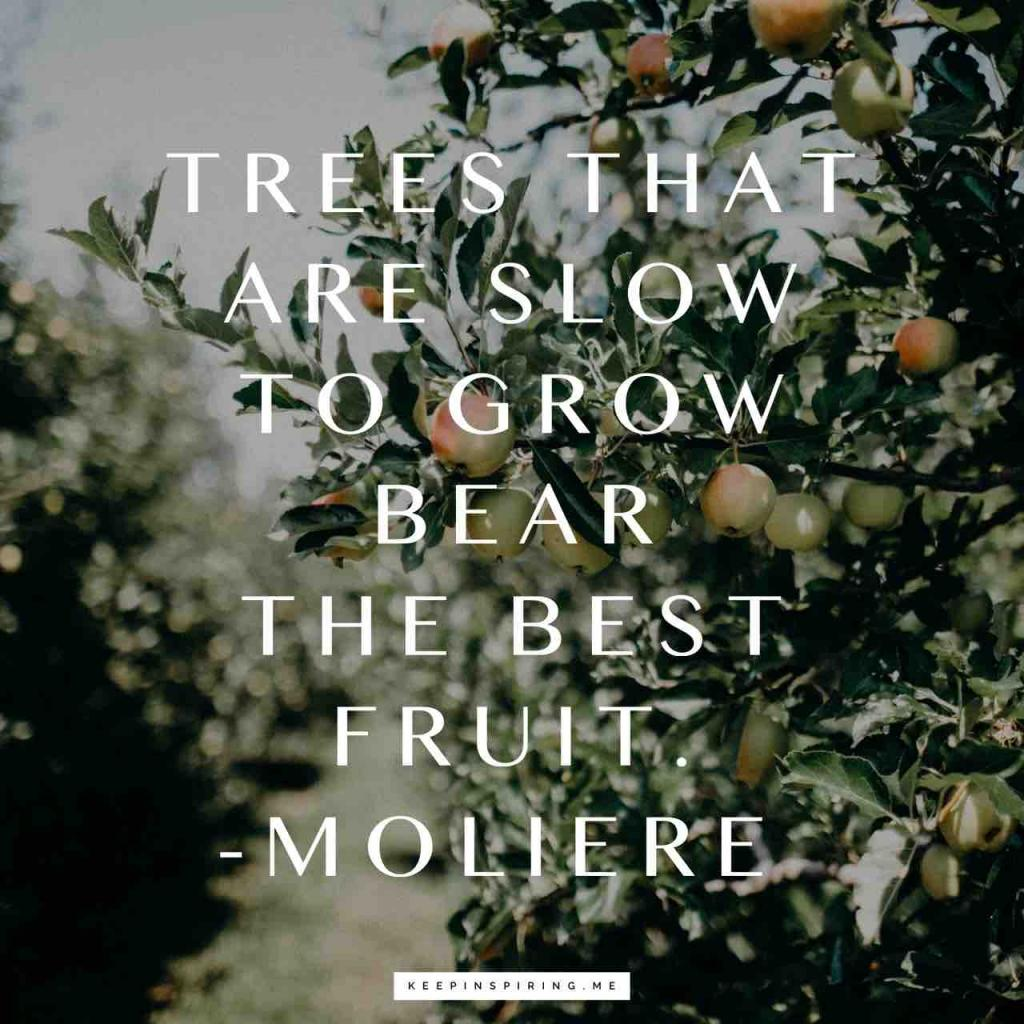 """Trees that are slow to grow bear the best fruit"""