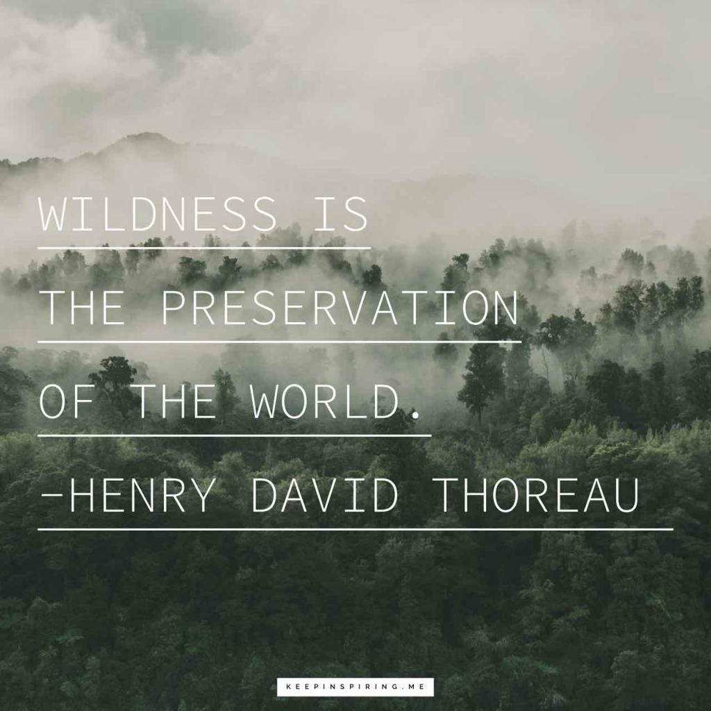 """Henry David Thoreau quote """"Wildness is the preservation of the World"""""""