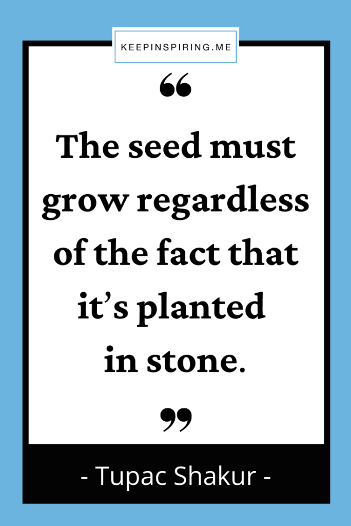 """""""The seed must grow regardless of the fact that it's planted in stone."""""""